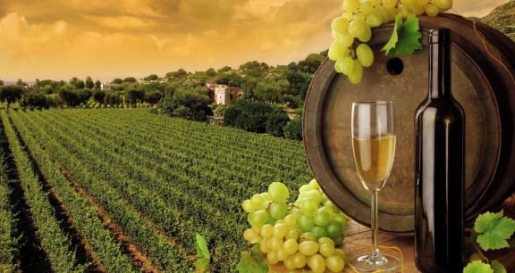 vinicola-turismo-rural