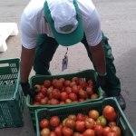 Mesa Brasil Sesc Parolin recebe oito toneladas de alimentos