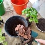 Horta doméstica: alternativa econômica e sustentável