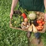 Sesc da Esquina: Mais saúde para você através de alimentos orgânicos!